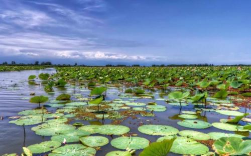 Anzali-Wetland